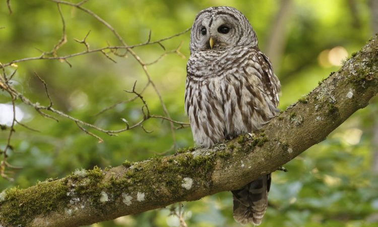 Must-Have Skills for Wise Leadership: Lessons from the Owl