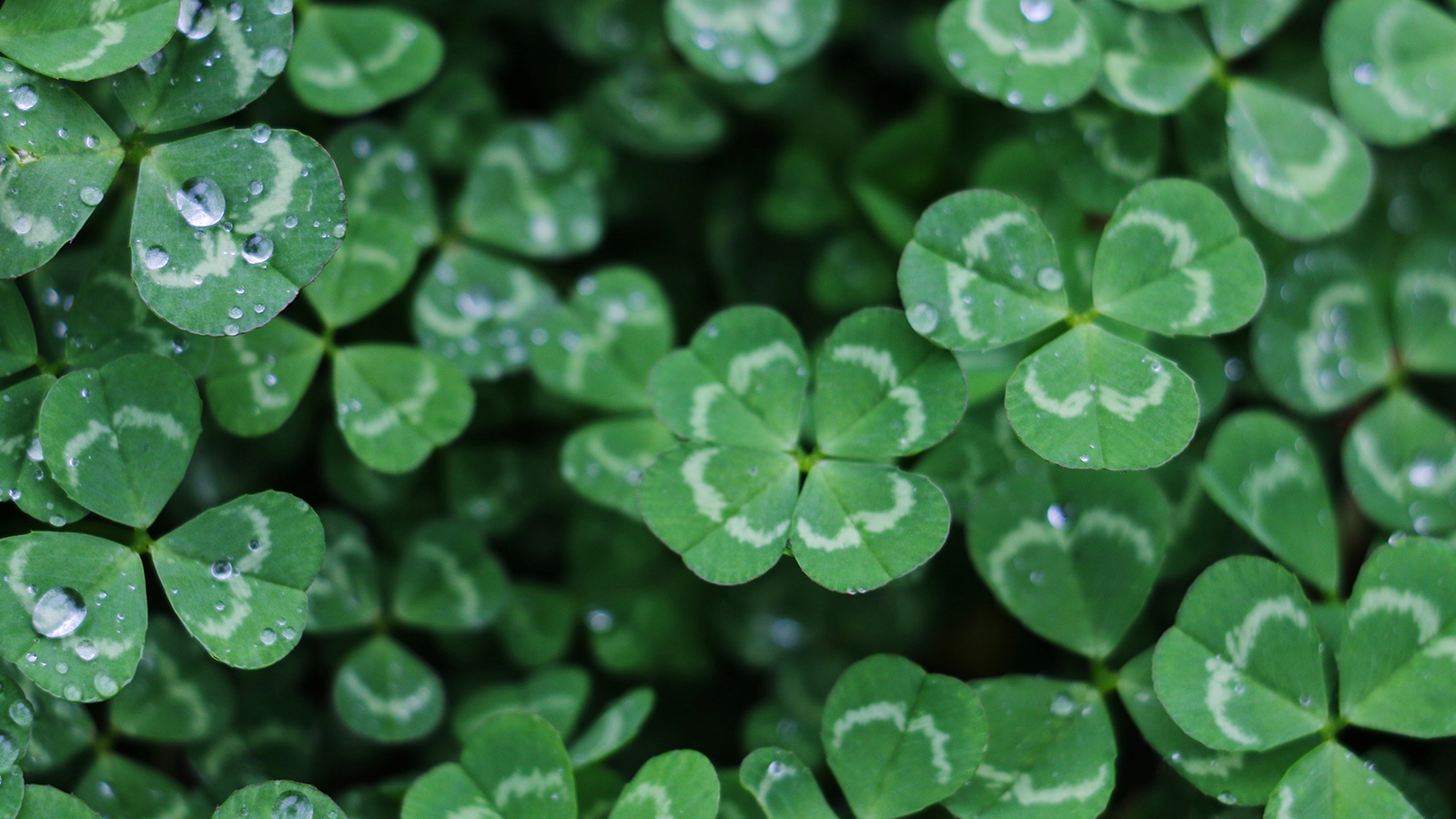 4 Ways to Increase Your Luck